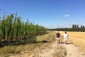 Hogs Back heads for new hop heights