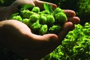 Hop on a bus to relish Kent's harvest ales